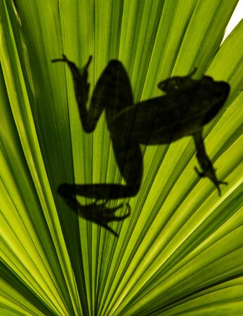shadow of frog on exotic leaf in detail