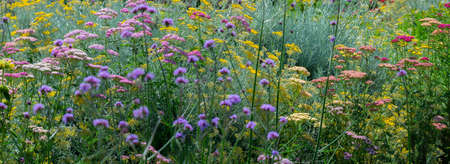 garden with perennials flowers close up Stock Photo