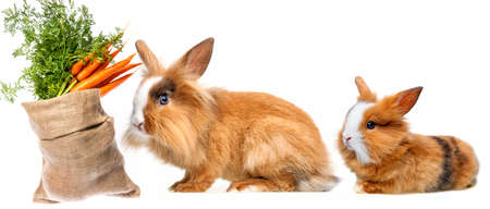 a cute rabbit and sack with carrot isolated on a white
