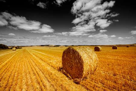 fields afrer harvest and black and white sky Standard-Bild