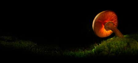 Mushrooms in mystery dark night forest