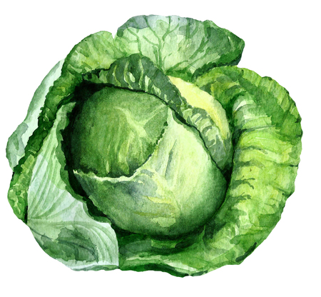 Watercolor green cabbage