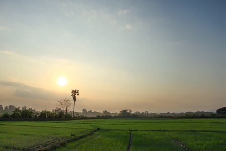 In thailand side road Rices farm view. photo