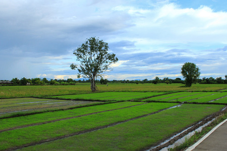 nat: In thailand side road Rices farm view. Stock Photo