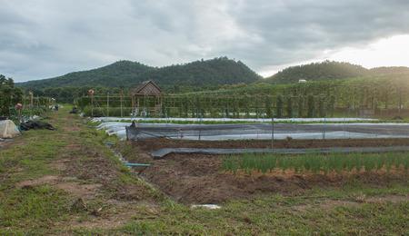 plants species: Converti Orto Le mie verdure coltivate economie e sufficienti Molte specie di piante di morning glory zucchine baccelli vegetali.