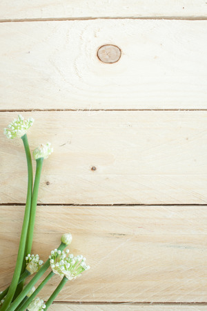 chive: Chive flower