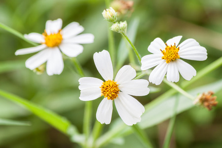 wasteful: White flowers Yellow stamens