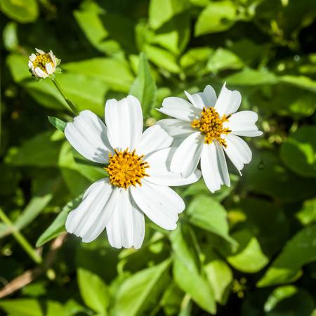 stami: Stami Bianco flowersYellow