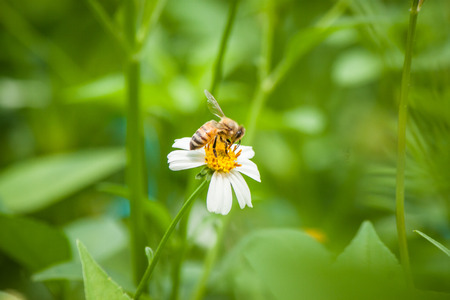 bee on flower: bee and White flower