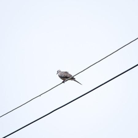 perch: bird Perch on power lines