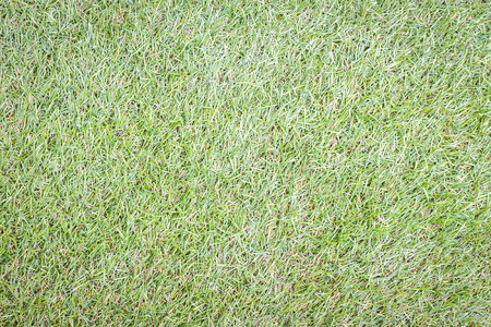 thick growth: Green grass background image