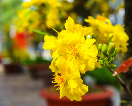 the flowers of traditional Vietnamese new year.
