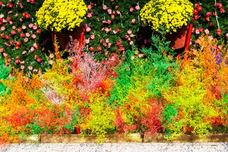 a decoration in the city. decor. colored fluffy grass is painted in a different color paint. 写真素材