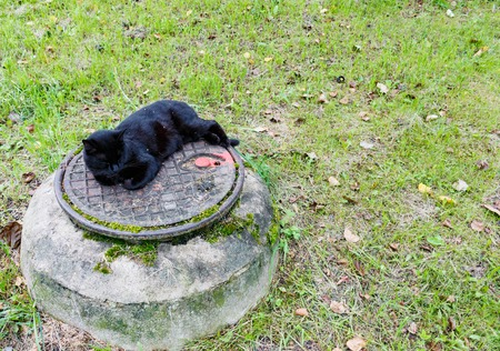 black cat sleeping on a sewer manhole. Stock Photo