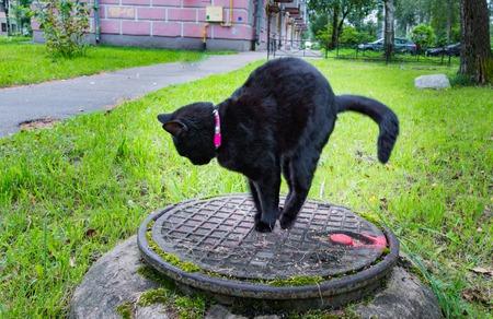 black cat sitting on a sewer manhole.