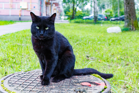 black cat sitting on a sewer manhole.