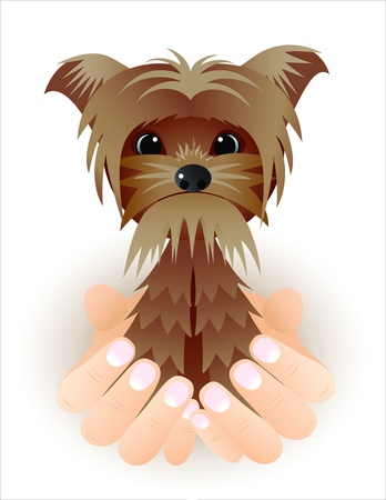 Cute vector Yorkshire puppy dog sitting in hands Illustration