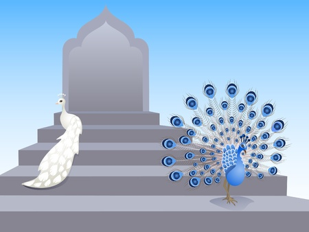 Two beautiful peacocks standing on a palace staircase Vector