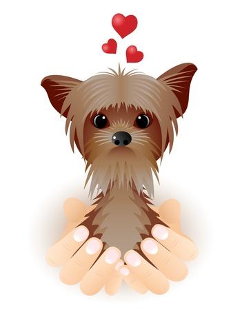 day care: San Valentino con carta di Yorkshire Terrier in amore seduto in palme.