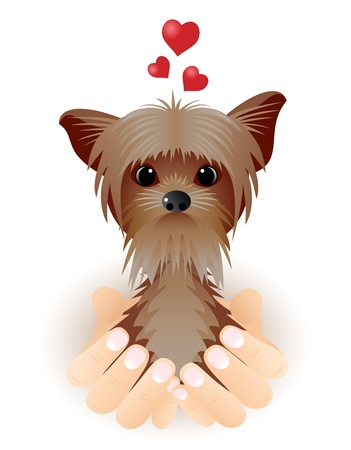 Valentine card with Yorkshire Terrier in love sitting in palms.