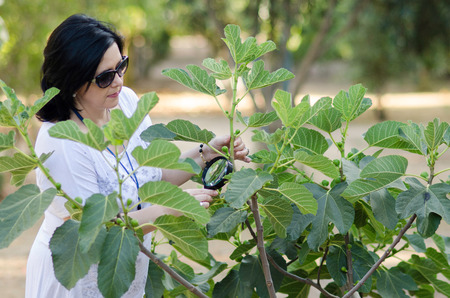 botanist: Woman botanist checking the growth of figs on the tree with magnifying glass