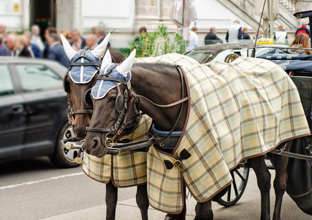 blinders: Pair of horses in plaid blankets and caps carry the carriage through the Vienna streets