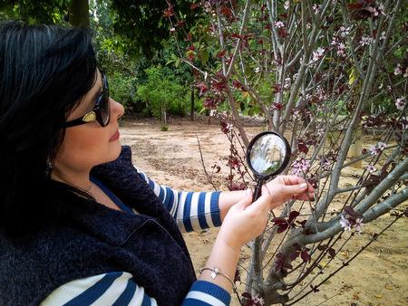 botanist: Botanist is checking Cistena Plum flowering shrub with magnifying glass