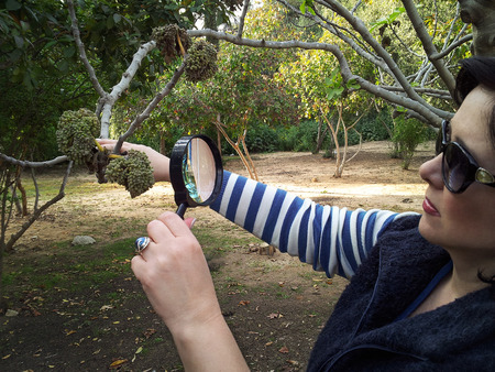 botanist: Botanist is studying at twisted fig leaves with magnifying glass