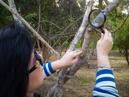 botanist: Botanist is carefully studying at bark of fig tree with magnifying glass