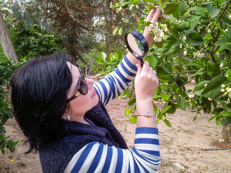 orange blossom: Botanist is carefully studying mandarin orange blossom with magnifying glass