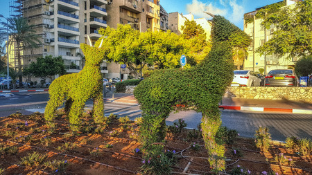 Rishon LeZion, Israel-September 24, 2016: Two topiary goats stand in flower bed located in dividing line of the road in residential district. The smaller animal lighted by sunrise looks at the camera Editorial
