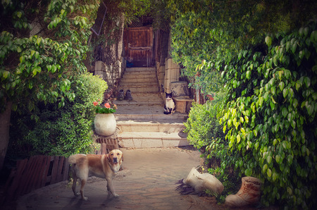 Old stone stairway in cosy picturesque patio leads to wooden door. Big red dog in the foreground looks at the camera. Black-white cat sitting on stone stairs of the doorway. It watches to the dog. There are green lush foliage on both sides