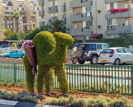 Rishon LeZion, Israel-June 17, 2017: One camel of green bush topiary decorates the separation line of the street. The bed flowers made in form of baskets on the back of the camel. The flowerbeds are planted with red and white daisies. Editorial