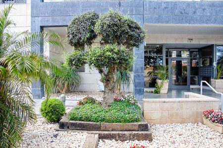 Ness Ziona, Israel-May 21, 2017: The entrance space of the glassed entrance to the house is covered by white pebbles hiding the brown raw soil. A trimmed olive tree stands on the left of the entrance staircase. There is a flower bed with green grass and s Editorial