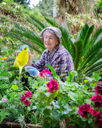 Senior adult woman posing with a yellow watering can. She prefers to work in the garden every morning cause she knows gardening is a stress-reliever.