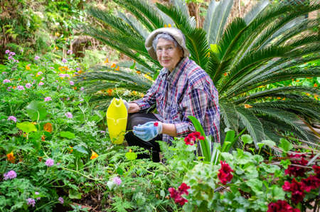 Elderly woman in male big size checkered shirt posing in the garden on the background of decorative palm tree