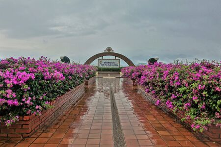 Rain and fog in thailand. Wet sidewalk, low dark clouds and bright pink flowering shrubs. Sad picture.