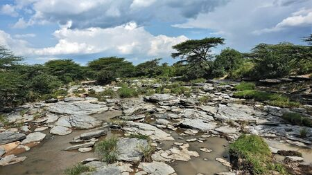 The bed of the African river in the dry season. Between large, flat stones, little muddy water remained. Umbrella acacia on the shores. Picturesque clouds in the sky. Kenya 版權商用圖片