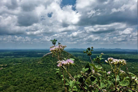 View of Sri Lanka from the top of Mount Sigiriya. In the foreground are the branches and delicate flowers of a shrub. Far away is a valley with a rainforest, a green hill. Picturesque clouds. 版權商用圖片