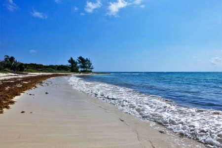 Beach on the Caribbean coast. Summer sunny day. Turquoise sea with lace edging of foam waves. A strip of algae on smooth sand. Clear blue sky. Green vegetation in the distance. Mexico.