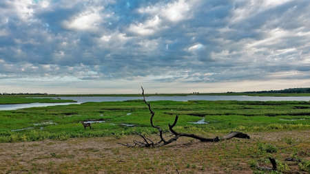 The contrast of the living and the dead in nature. On the bare ground lies a large, withered twisted branch of a tree. Behind a line, lush grass grows, a river flows, an antelope grazes. Clouds. Banco de Imagens