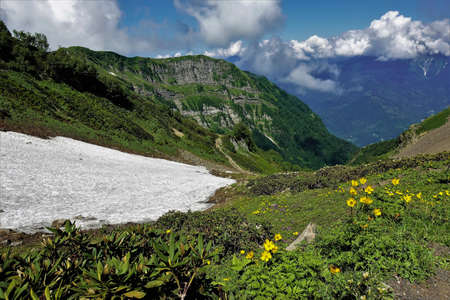 Summer day in the alpine meadows. In the valley there are yellow wildflowers, islands of snow among the greenery. There are picturesque clouds on the top of the Caucasus Mountains. Russia. Sochi.