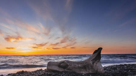 An old weathered, picturesque log lies on the pebble of the beach. Evening. The sun disappeared over the horizon. The blue sky and clouds are highlighted in orange and pink. The waves are foaming.