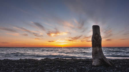 Picturesque weathered log against the sky. Evening. The sun disappeared. In the blue sky, pink clouds and orange highlights. Small waves at sea. Pebble beach. Russia