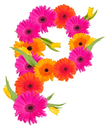 P flower alphabet isolated on white  photo