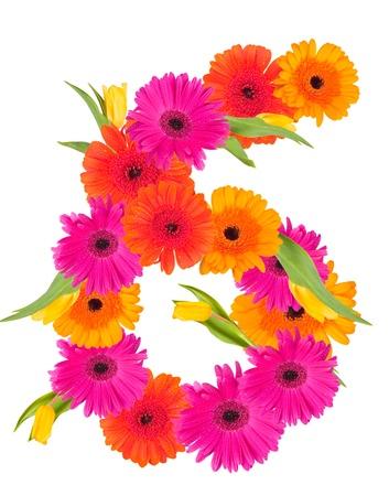6, flower alphabet isolated on white