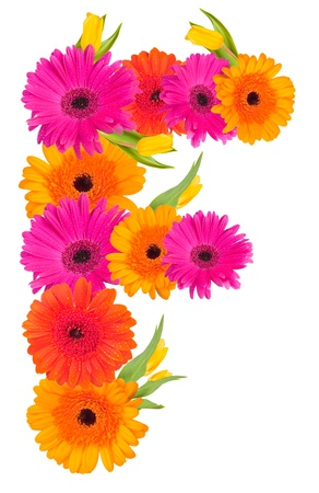 f,flower alphabet isolated on white  photo