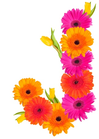 J flower alphabet isolated on white  photo