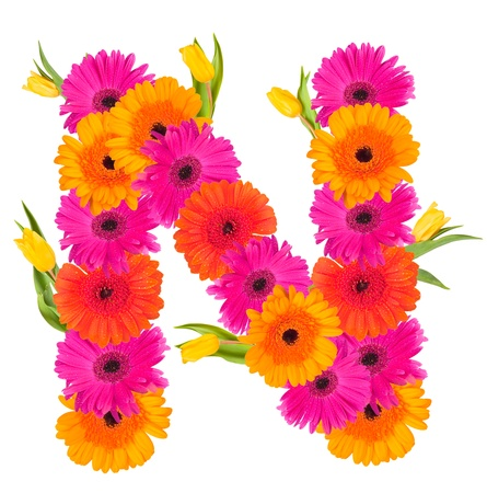 N flower alphabet isolated on white  Stock Photo - 19000972