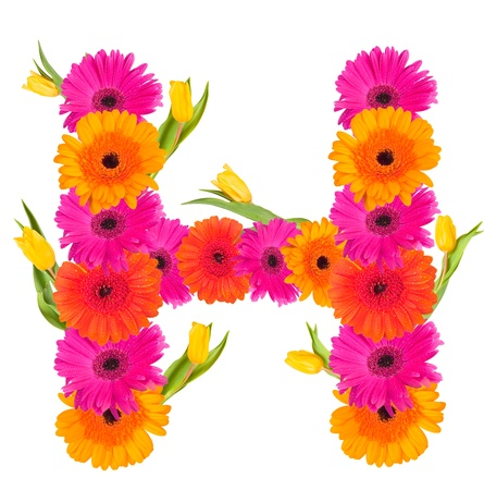 H flower alphabet isolated on white  photo